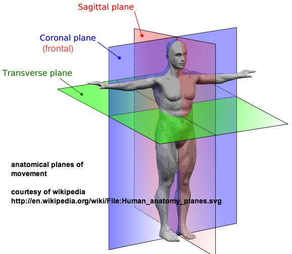 The human body; a trainers view (mine, anyway). (1/4)